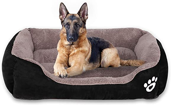Why it is important to have a separate bed for dogs?